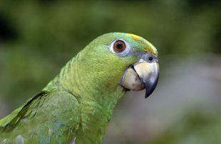green-parrot-1392406-1919x1275